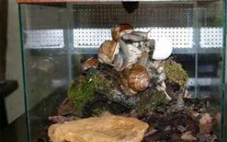 Какой аквариум нужен ахатинам