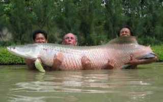 Длина тела рыбы