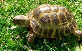 Как найти сбежавшую черепаху