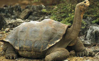 Сколько лет самой старой черепахе