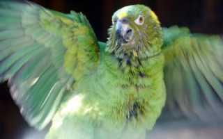 Если попугай заболел чем лечить