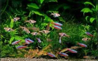 Самые маленькие рыбки для аквариума