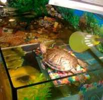 Какие лампы нужны для красноухих черепах