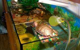 Лампа для водных красноухих черепах