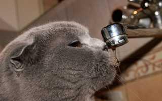 Чем кормить кота британца кастрированного