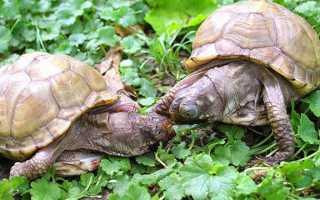Корм для черепах в домашних условиях