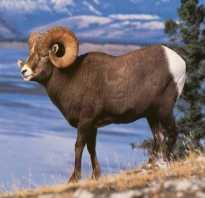 Фотографии животных занесенных в красную книгу