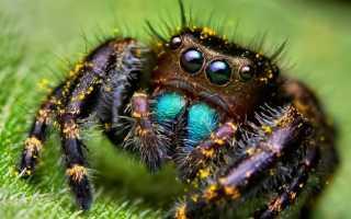 Самые дорогие пауки