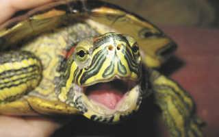 Почему черепаха не растет