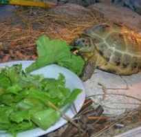 Чем кормить черепаху зимой