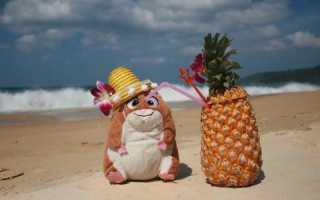 Можно ли хомякам кокос