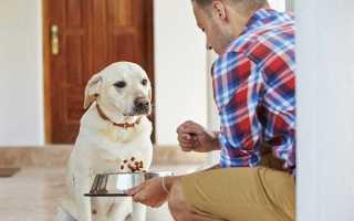 Рвота у собак чем лечить