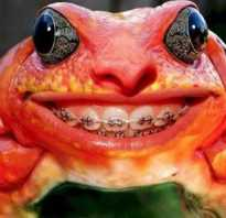 Зубы у лягушек и жаб