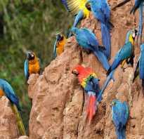 Где заказать попугая