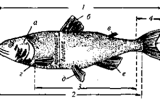 Рыбы к какому классу относятся