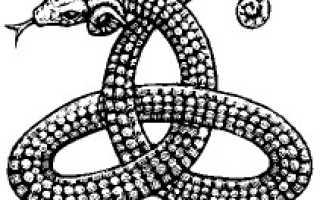 Змея с рогом на носу