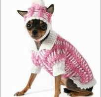 Вязание для собак мелких пород
