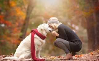 Средние гипоаллергенные породы собак