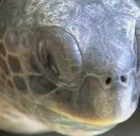 Черепаха впала в спячку что делать