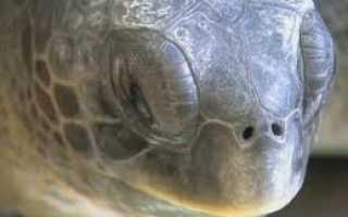 Сколько спят черепахи сухопутные