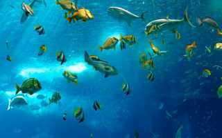 Плоская рыба в море