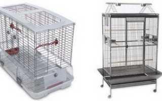 Правила ухода за попугаями