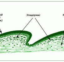 Змея это рептилия или земноводное