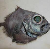 Рыба похожая на камбалу название