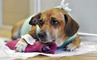 Чем обезболить собаку после операции