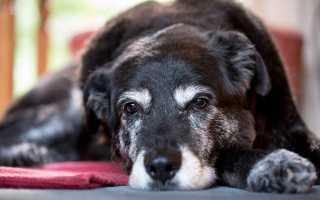 Самая долгожительная порода собак