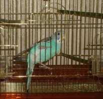 Условия содержания попугаев