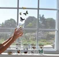 Как содержать бабочку в домашних условиях