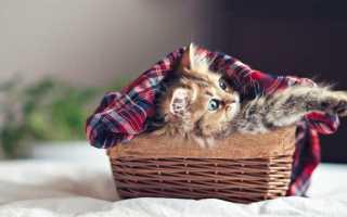 Чем кормить котенка 1 2 месяца