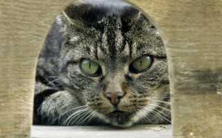 Характер полосатых кошек
