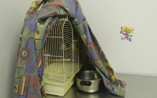 Как понять что попугай заболел