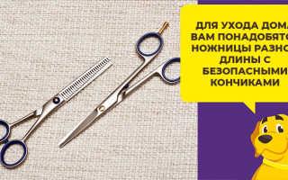 Как подстричь шпица дома самостоятельно ножницами