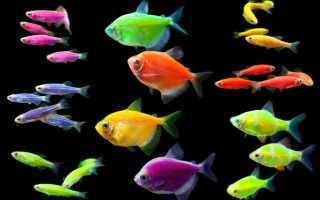 Светящиеся рыбы в аквариуме