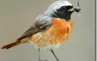 Насекомоядные птицы фото