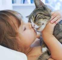 Как кот лечит хозяина