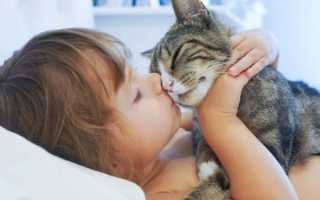 Правда ли что коты лечат