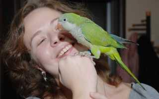 Какие попугаи лучше всего разговаривают