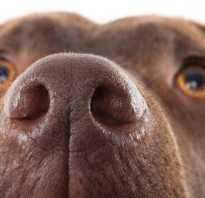 Капли в нос собаке при насморке