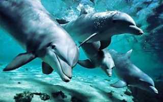 Дельфин это рыба