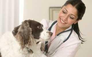 Как промывать нос собаке