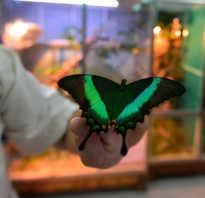 Сколько живут бабочки в домашних