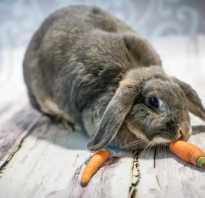Чем можно кормить домашних кроликов