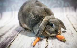 Чем кормят кроликов мясных пород