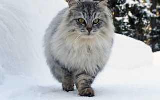 Гипоаллергенные кошки фото