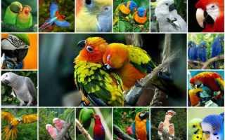 Сколько попугаев в змее