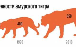 Тигр занесен в красную книгу